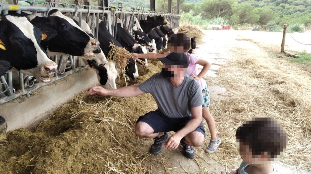 Dando de comer a las vacas en Can Gel