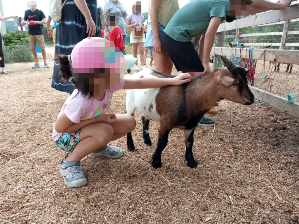 Una cabra muy sociable